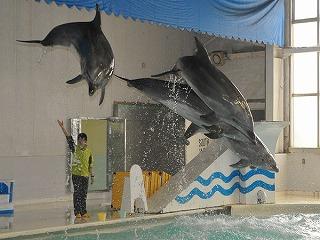 おたる水族館 イルカショー