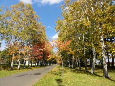 紅葉 2015 帯広 緑ヶ丘公園