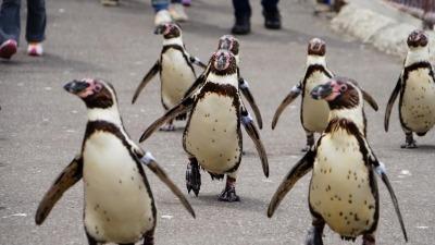 ペンギンの海まで遠足 小樽水族館